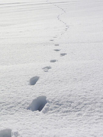 remoteness: A man has left behind their footprint in the snow
