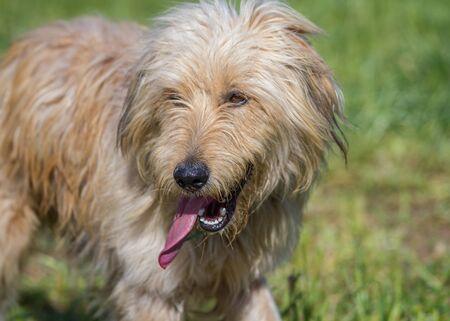 sheepdog: Sheepdog in a meadow