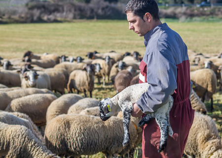 Baix Emporda, Catalonia - February 15, 2014 - A farmer grabs a lamb in her arms Editorial