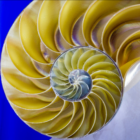logarithmic: Spiral Pattern inside of a Nautilus Shell Stock Photo