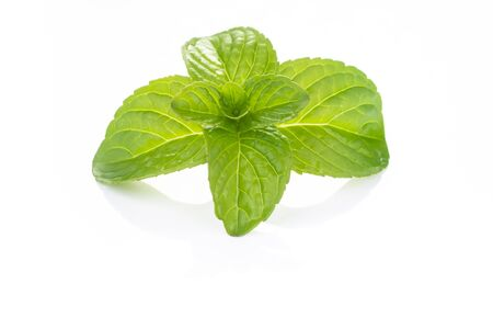 Sprig of fresh mint, freshly picked and placed on a white table Stock Photo