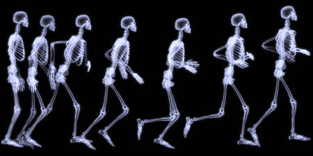 anatomically: 3D rendering illustration,sequenced radiography of a human skelegon running