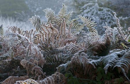 helechos: Helechos en la niebla Foto de archivo