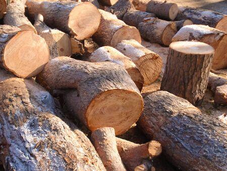 log of wood in italy 写真素材 - 132049543