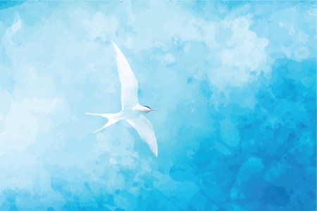 Seagull in flight Illustration