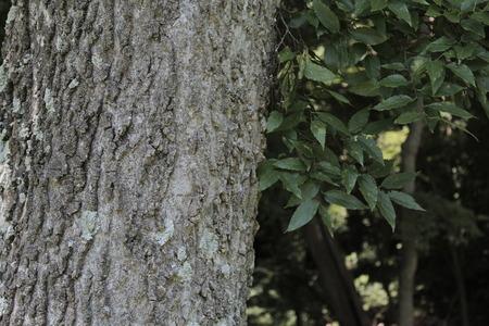 Tree and Leaf Balance
