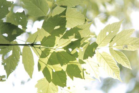 Illuminating Leaves