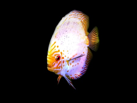Disco fish photo