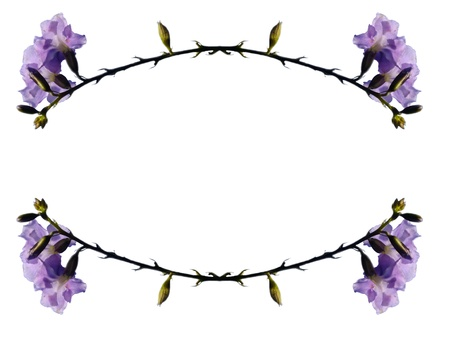 Frame - Violet flowers photo