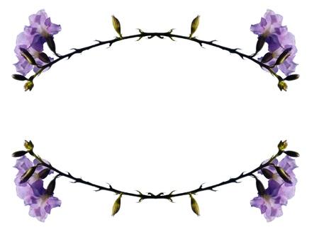 Frame - Violet flowers