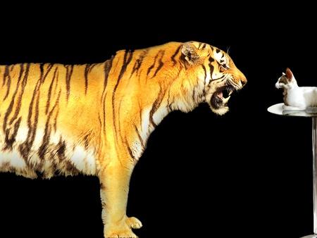 treacherous: Tiger versus cat business concept Stock Photo