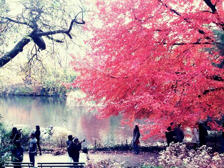 autum: Central park in autum Stock Photo