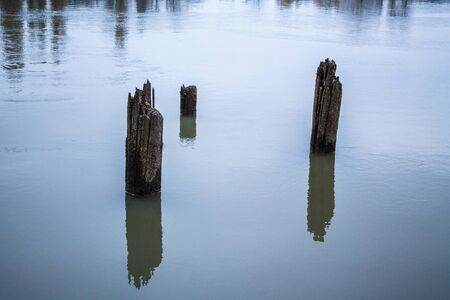 Old wooden piles of old ruined pier out of the water. Overcast weather
