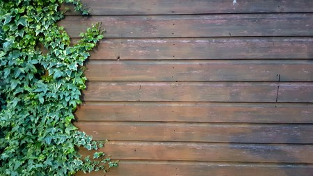 Side of a dark wooden shed with ivy growing up the side Stock Photo