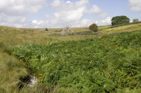 shepards: Moorland Stream and shepards shelter
