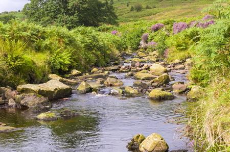 Wheeldale Gill is an ancient Stream across the North York Moors Stok Fotoğraf