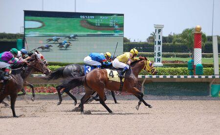 racehorses: Thoroughbred racehorses overschrijding van de eind streep op een south florida racetrack