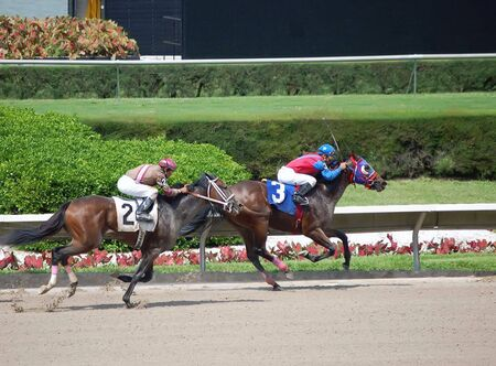 racehorses: The two horse closing on in the three horse in a race at a south florida racetrack