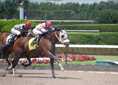racehorses: Postposition four horse taking the lead in the srive to the finish line at a southeast florida track