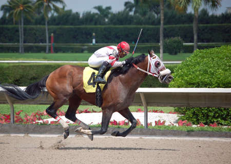 The four horse sprinting to a win at a southeast florida racetrack Imagens
