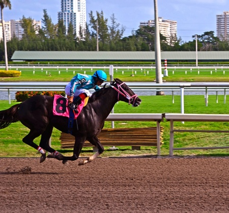 racehorses: Kidstrong Fever winner of the first race on opening day at Gulfstream Park,Hallendale,Florida on3 December 2011