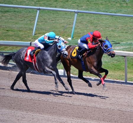 corse di cavalli: Due cavalli da corsa purosangue in esecuzione dura al traguardo in una gara uno miglio a sud-est della Florida una pista