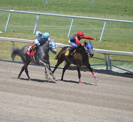 racehorses: Two four year old thoroughbred racehorses sprinting to the finish line in a six furlong claiming race