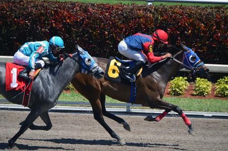 corse di cavalli: Posta posizione sei e uno finendo secondo e il terzo in una gara uno miglia sulla sporcizia Editoriali