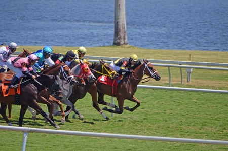 Closely bunched horses just out of the starting gate in a mile and a sixteenth race on grass at Gulfstream Park,Hallendale ,Florida on 5 April 2014  Editorial