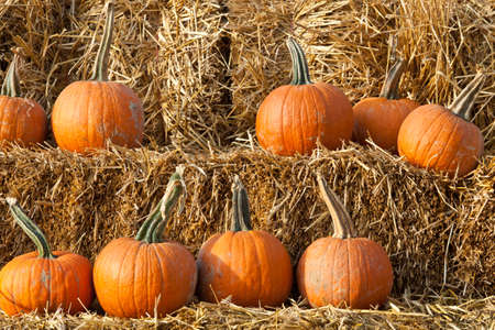Pumkins on hay bales for sale at farm market