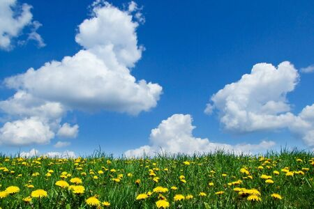 dandelion, grass, blue sky, clouds