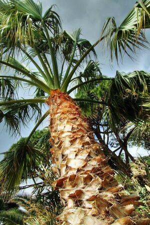 a palm, a little bit cloudy Stock Photo