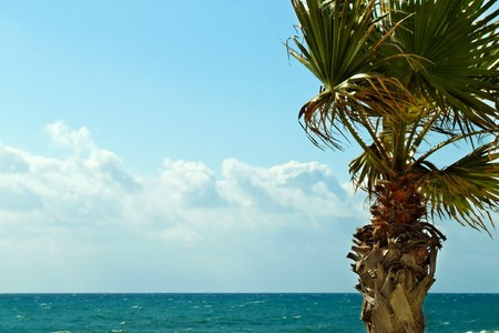 foreground a palm, background the sea Stock Photo