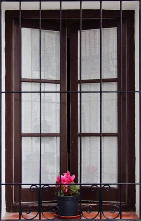 a window and a flower