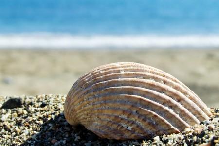a shell on a beach Stock Photo
