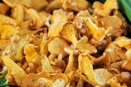 a few of fresh chanterelles, mushrooms