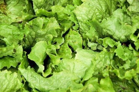 a few of green salads, head lettuce Stock Photo