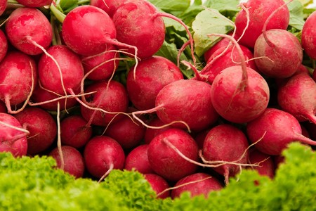 a closeup from a few red radish. some leaves visible
