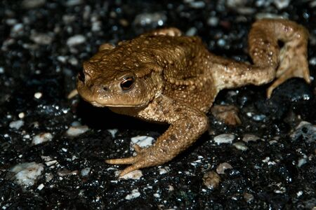 A toad on a street Stock Photo