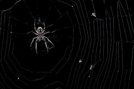 A garden spider (Araneus diadematus) in her net. It is night Stock Photo