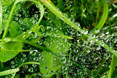 Water drops on a cobweb. The cobweb is in a meadow Stock Photo