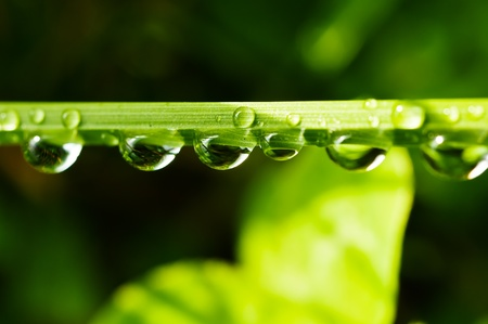 Water drops on a blade of grass. In the background a meadow blurred