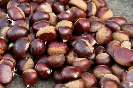 castanea sativa: Sweet chestnut Castanea sativa on a wooden desk side by side