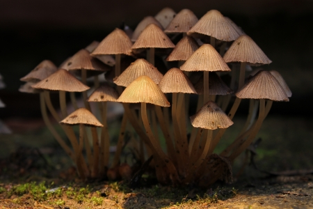 clump: A clump of toadstools huddled together with backlighting