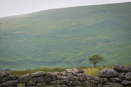 Lone tree, stone wall