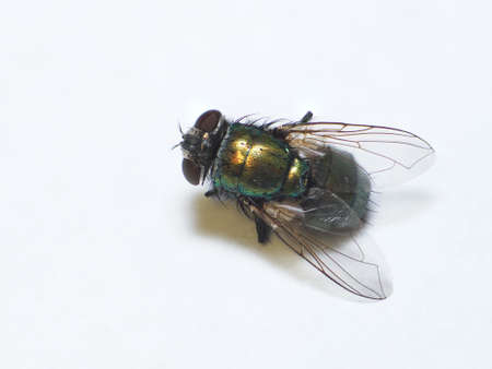 Low angle macro of a common house fly