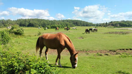 Horses Grazing on Grass in a Green Meadow