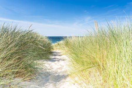 blue summer sky: Dune with beach grass close-up. Sylt.