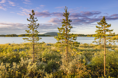 swampland: Sunset on the lake in Northern Sweden.