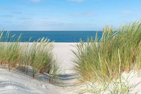 Dune with beach grass in the foreground.